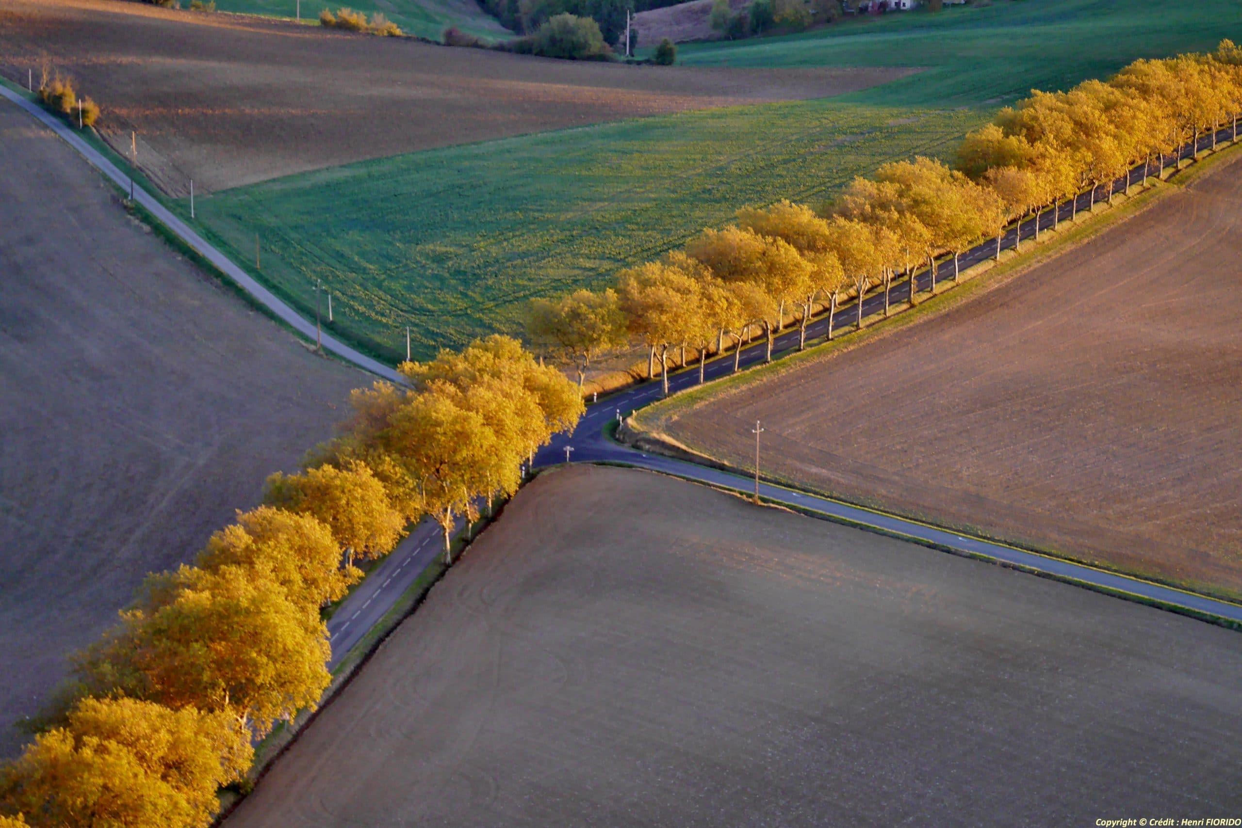 Vue aérienne d'un alignement d'arbres avec les feuilles dorées au bord d'une route